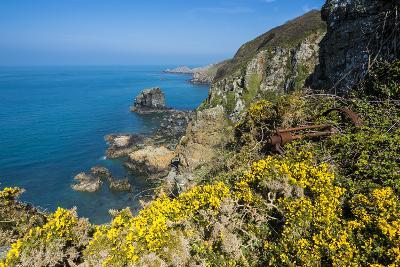 Blooming Gorse over the East Coast of Sark, Channel Islands, United Kingdom-Michael Runkel-Photographic Print