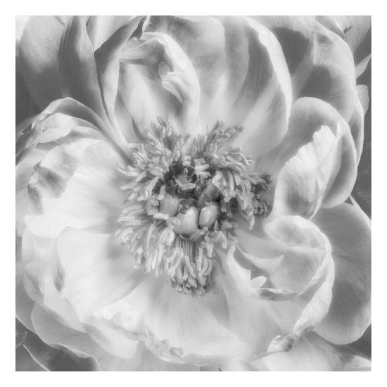 Blooming Intellect 3-Dianne Poinski-Art Print