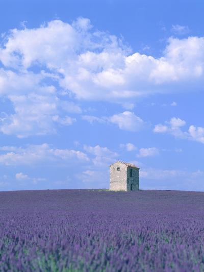 Blooming lavender and stone house in France-Herbert Kehrer-Photographic Print
