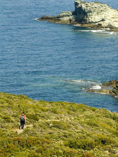 Blooming Maquis Along Rugged Mediterranean Coastline, Le Sentier Des Douaniers, Cap Corse-Trish Drury-Photographic Print