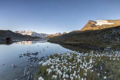 Blooming of Eriofori (Cotton Grass) on Levanne Mountains-Roberto Moiola-Photographic Print