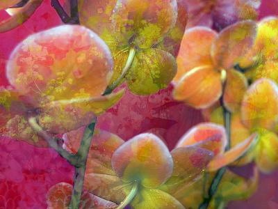 Blooming Orchids in Orange Tones Infront of Red Pink Floral Ornament Backgound-Alaya Gadeh-Photographic Print
