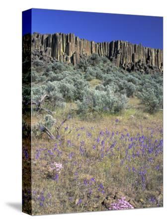 Blooming Phlox, Larkspur and Columnar Basalt, Columbia Natonal Wildlife Refuge, Washington, USA