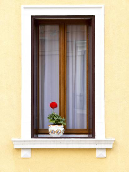 Blooming Red Geranium on Beautiful White Wooden Windowsill--Photographic Print
