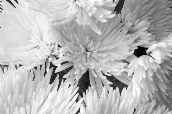 Blooming White BW-Bob Rouse-Photographic Print
