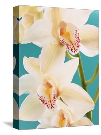 Blooming White Orchids