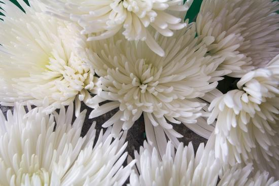 Blooming White-Bob Rouse-Photographic Print