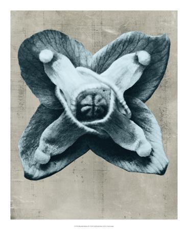 https://imgc.artprintimages.com/img/print/blossfeldt-redeux-iv_u-l-f5q4de0.jpg?p=0