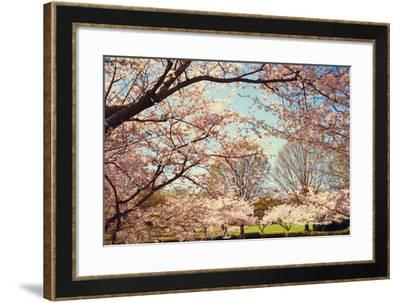 Blossom Beauty I-Kathy Mansfield-Framed Photographic Print