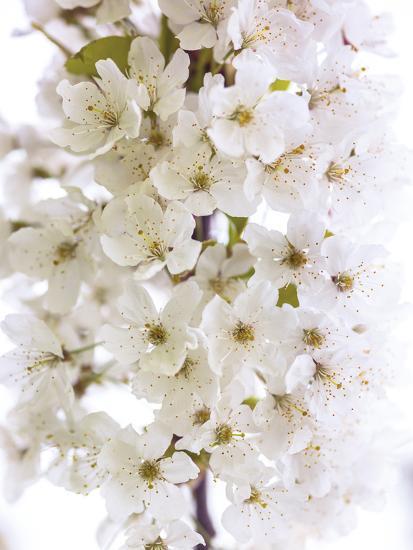 Blossom Bundle-Assaf Frank-Giclee Print
