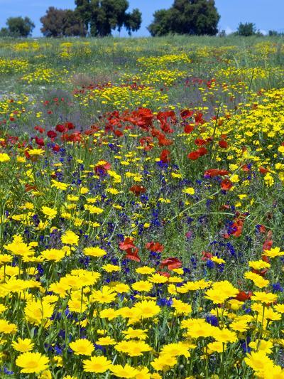 Blossom in a Field, Siena Province, Tuscany, Italy-Nico Tondini-Photographic Print