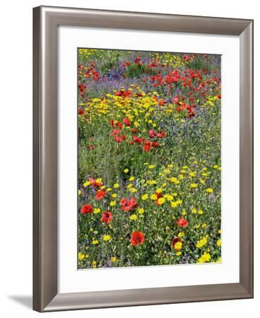 Blossom in a Field, Siena Province, Tuscany, Italy-Nico Tondini-Framed Photographic Print
