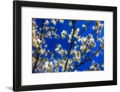 Blossom on Blue, 2018-Helen White-Framed Giclee Print