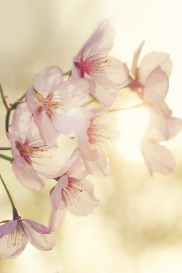Blossom-Andreas Stridsberg-Giclee Print