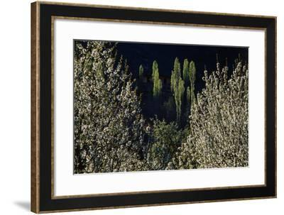 Blossomed Apple and Poplar Trees. a Sunny Spring Afternoon in the Alamut Valley, Iran-Babak Tafreshi-Framed Photographic Print