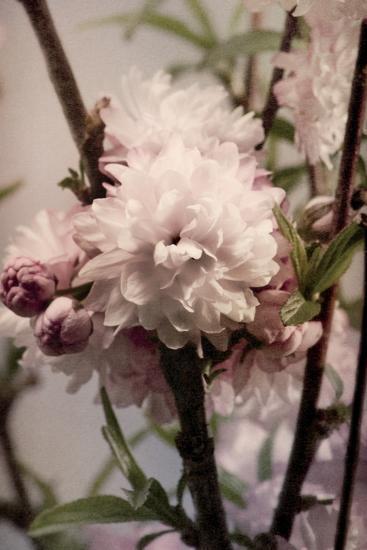 Blossoming Almond 2-Julie Greenwood-Premium Giclee Print