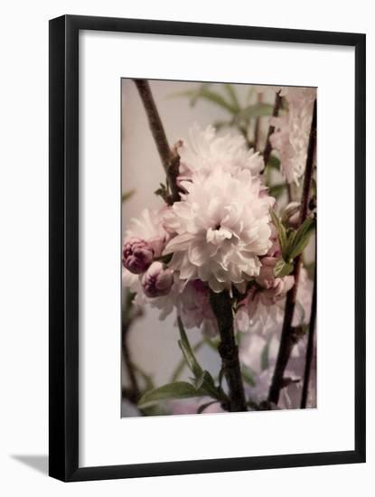 Blossoming Almond 2-Julie Greenwood-Framed Premium Giclee Print