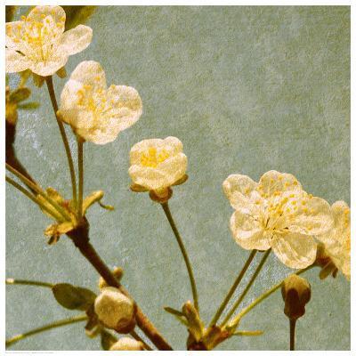 Blossoming Branch--Art Print