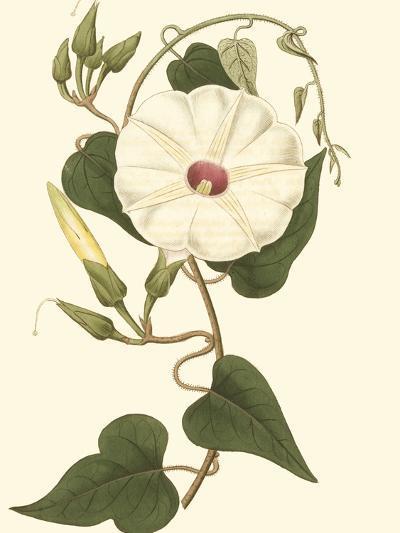 Blossoming Vine I-Sydenham Teast Edwards-Art Print