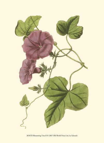 Blossoming Vine II-Sydenham Teast Edwards-Art Print