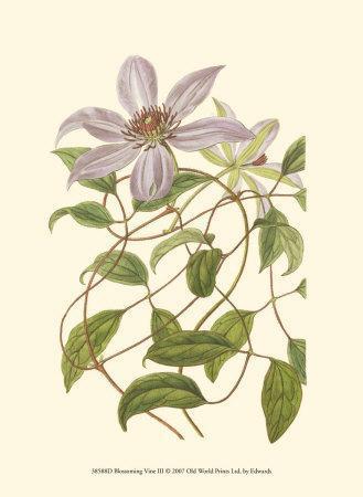 https://imgc.artprintimages.com/img/print/blossoming-vine-iii_u-l-f1pooq0.jpg?p=0