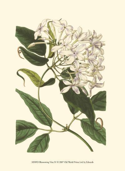 Blossoming Vine IV-Sydenham Teast Edwards-Art Print