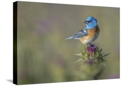 Blowin' In The Wind-Greg Barsh-Stretched Canvas Print