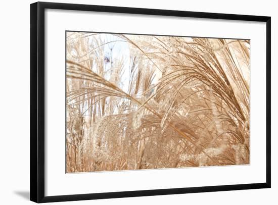 Blowing Grass I-Dana Styber-Framed Photographic Print