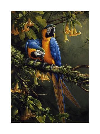 https://imgc.artprintimages.com/img/print/blue-and-gold-macaw_u-l-q12uf6g0.jpg?p=0