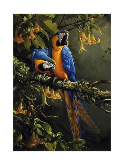 Blue and Gold Macaw-Michael Jackson-Giclee Print