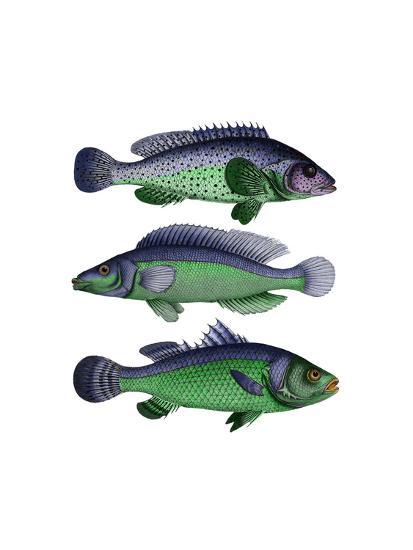 Blue and Green Fish Trio-Fab Funky-Art Print