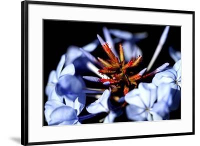 Blue And Orange Flower-Dana Brett Munach-Framed Giclee Print