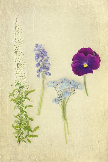 Blue and Purple Flowers-Elizabeth Urqhurt-Photographic Print