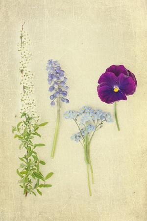 https://imgc.artprintimages.com/img/print/blue-and-purple-flowers_u-l-pz0kr70.jpg?p=0