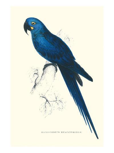 Blue and Yellow Macaw - Ara Ararauna-Edward Lear-Art Print