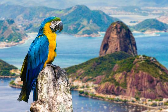 Blue and Yellow Macaw in Rio De Janeiro, Brazil-Frazao-Photographic Print