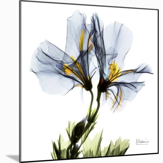 Blue Azalea in Bloom-Albert Koetsier-Mounted Art Print