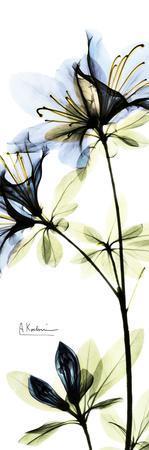 https://imgc.artprintimages.com/img/print/blue-azalea_u-l-f547z00.jpg?p=0