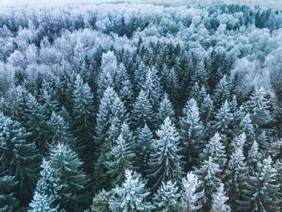 https://imgc.artprintimages.com/img/print/blue-background-texture-of-a-frozen-forest-at-winter-aerial-shot_u-l-q1gkqm90.jpg?p=0