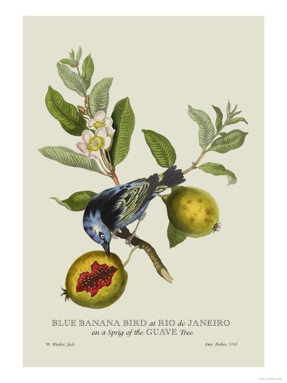 Blue Banana Bird at Rio de Janeiro-J^ Forbes-Art Print
