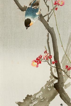 https://imgc.artprintimages.com/img/print/blue-bird-on-a-plum-tree_u-l-pnabv30.jpg?p=0