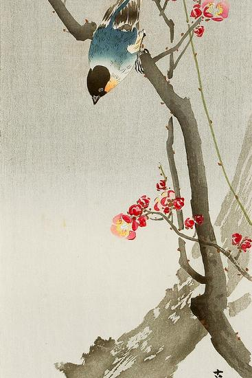 Blue Bird on a Plum Tree-Koson Ohara-Giclee Print