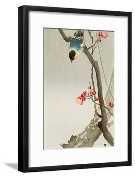 Blue Bird on a Plum Tree-Koson Ohara-Framed Giclee Print