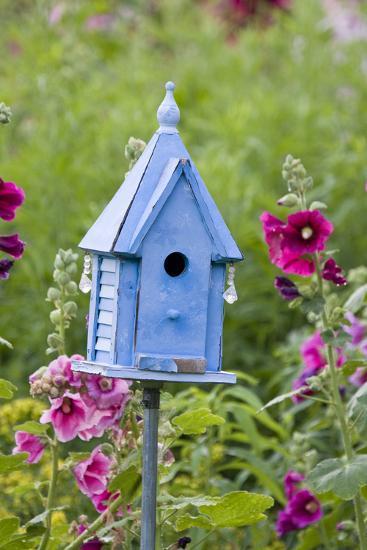 Blue Birdhouse Near Hollyhocks. Marion, Illinois, Usa-Richard ans Susan Day-Photographic Print