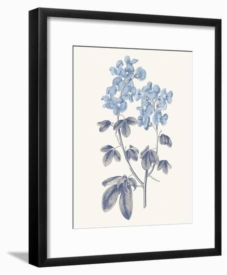 Blue Botanical III-Wild Apple Portfolio-Framed Art Print