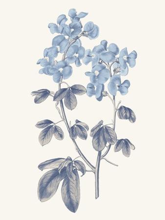 https://imgc.artprintimages.com/img/print/blue-botanical-iii_u-l-q1ddw5x0.jpg?artPerspective=n