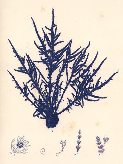Blue Botanical Study II-Kimberly Poloson-Premium Giclee Print