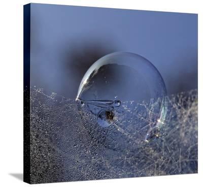 Blue Bubble Morning-Kent Mathiesen-Stretched Canvas Print