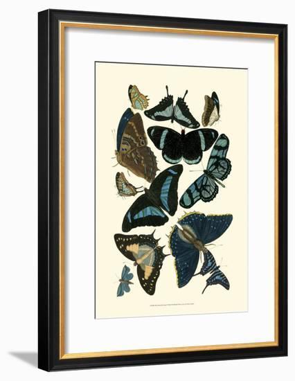 Blue Butterfly Study--Framed Art Print