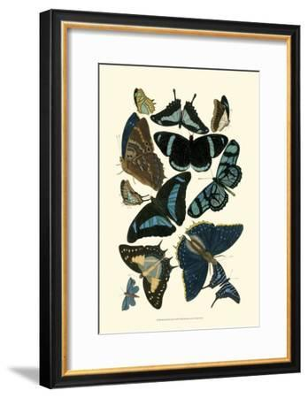 Blue Butterfly Study--Framed Art Print
